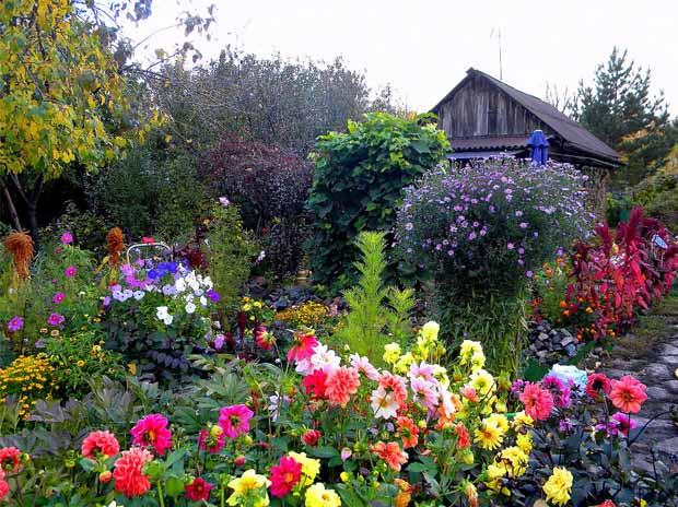 подкормка цветов дрожжами