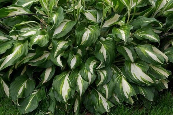 листва окрашена